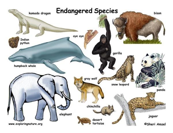 endangered_animals72