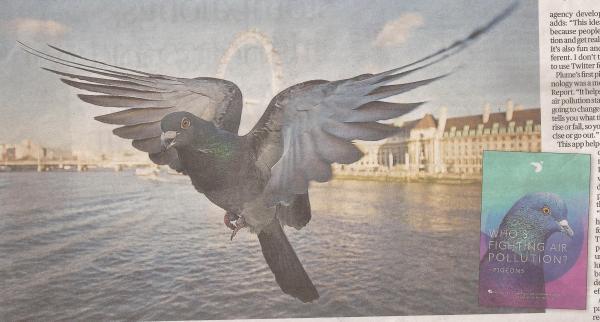 pigeon monitors