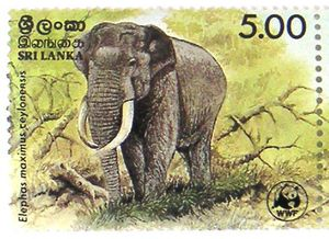 Big-Elephant