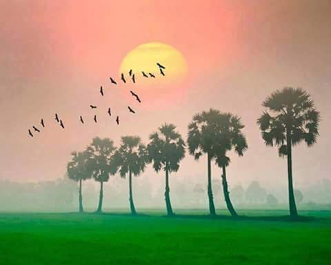 birds, pollachi