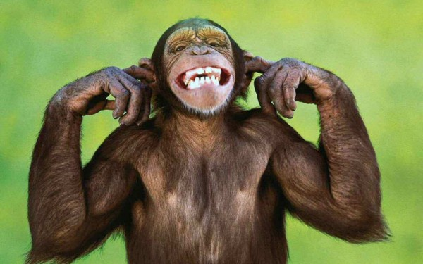 monkey-images-14