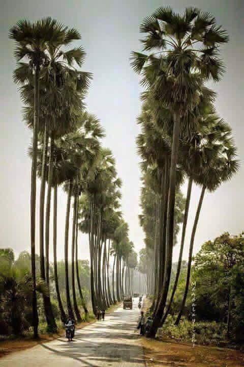 palmyrah avenue