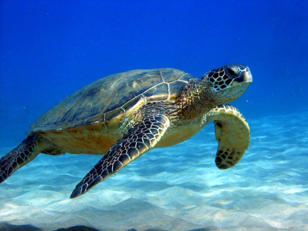 turtle-03