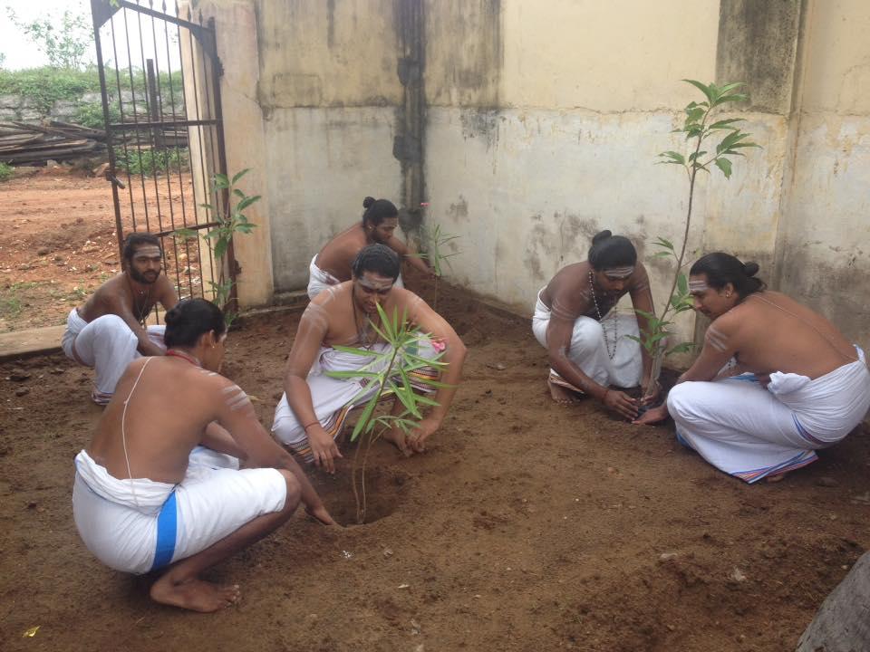 tree planting, fb