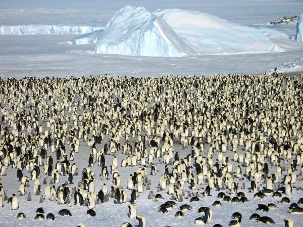 penguin kuuttam