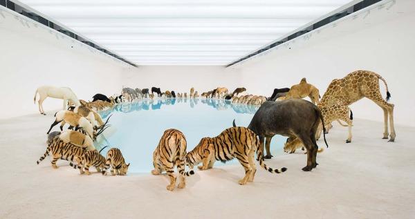 animals-water-1