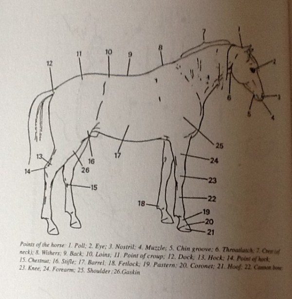 horse-body-parts