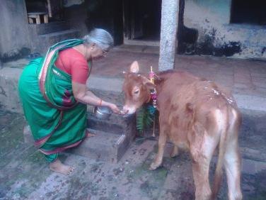cow in Sanskrit | Tamil and Vedas
