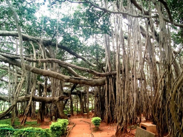 Trees In Tamil